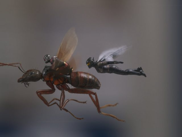 paul rudd in evangeline lily v filmu ant-man in osa ant-man and the wasp